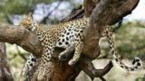 18 animali che dormono nelle posizioni più strane