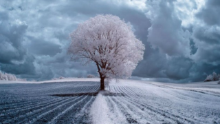 Gli stupefacenti alberi a infrarossi del fotografo Przemyslaw Kruk