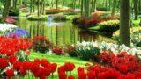 La fioritura più colorata del mondo è a Keukenhof