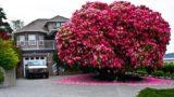 I 16 alberi più belli del mondo