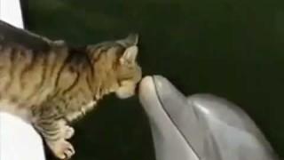 La storia d'amore tra un gatto e un delfino