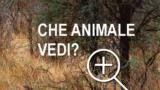 Guarda queste 10 foto e trova l'animale nascosto. Scopri se sei PREDA o CACCIATORE.