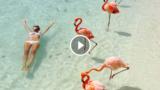 Una spettacolare spiaggia affollata di… fenicotteri rosa!