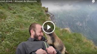 Fate attenzione alle marmotte: attaccano l'uomo! Sì, ma di baci 