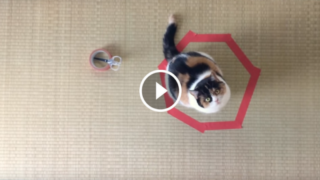 Il mistero dei gatti nei cerchi
