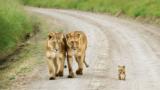 Le 17 foto di famiglia più belle del mondo animale