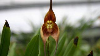 10 Specie Floreali che imitano altro