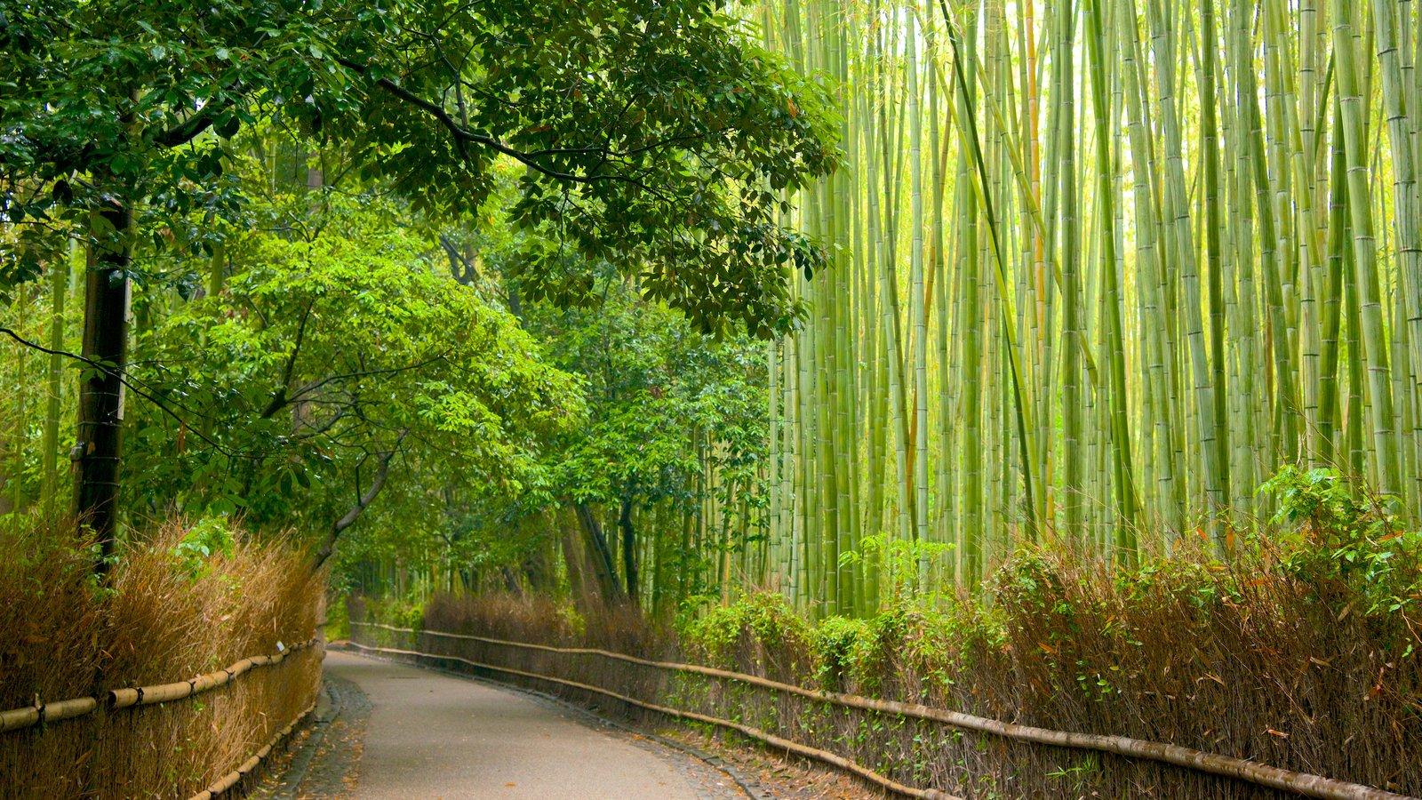 69912-Arashiyama-Bamboo-Forest