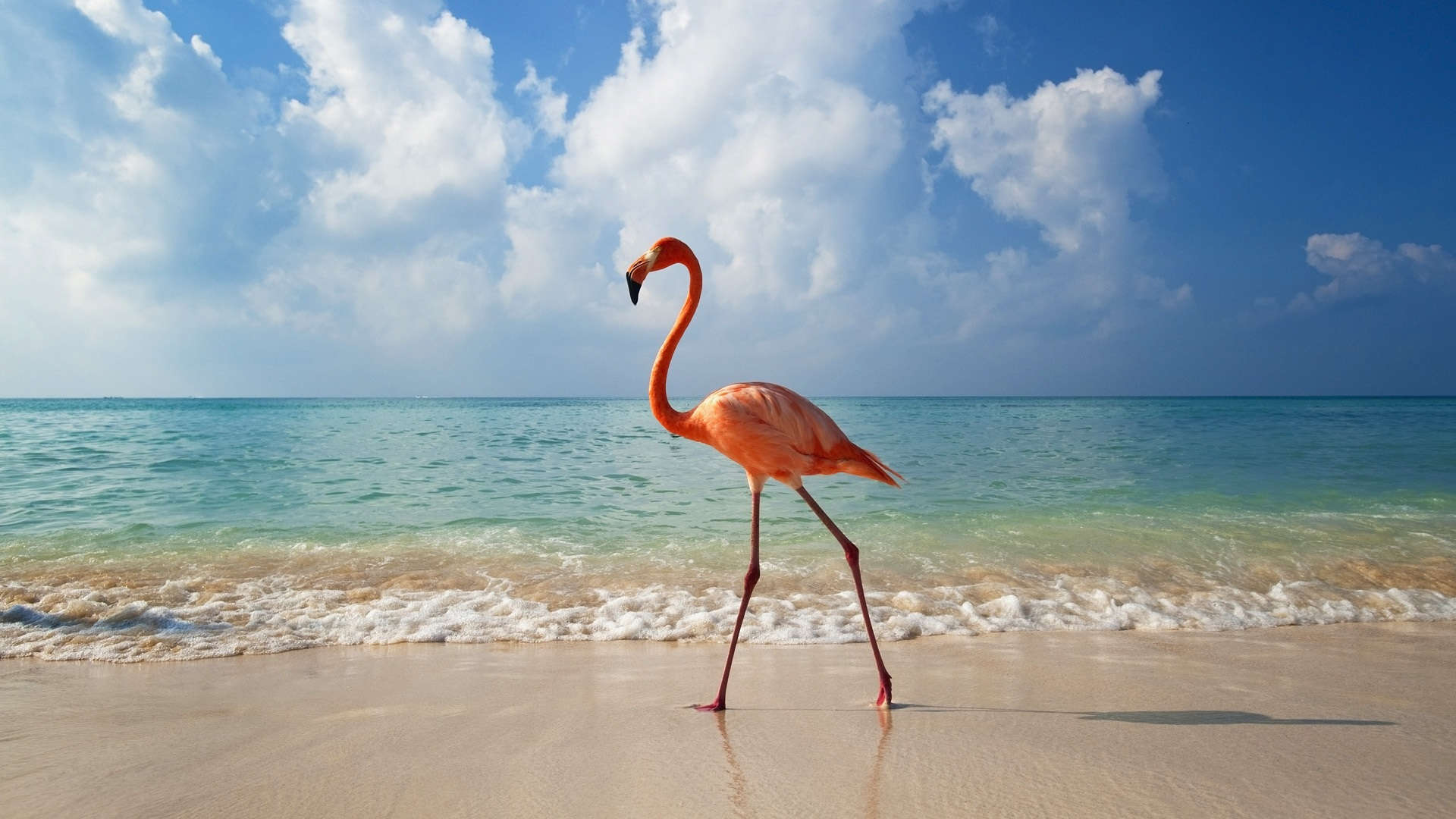 A-flamingo-beach_1920x1080