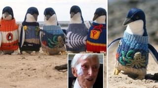 A 109 anni realizza maglioni ai ferri per i Pinguini feriti.