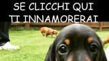 Il cagnolino con lo sguardo più tenero del mondo è diventato una vera STAR ㋡