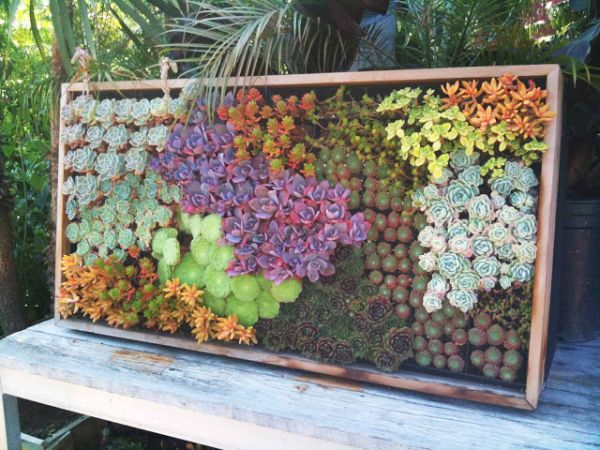 Combine-different-colors-of-succulents-to-get-a-more-vibrant-look