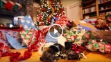 Sorpresine tenere tenere di Natale…