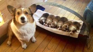 I primi vagiti dei cuccioli