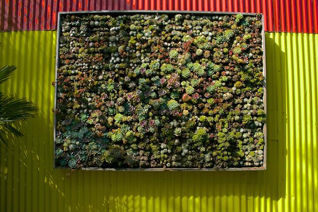 Flora-Grubb-Gardens-succulent-panel-photo-Marie-Cameron-2015