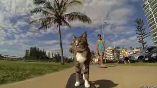 L'unico gatto al mondo che va sullo skateboard!