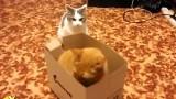 Togliti subito da quella comoda scatola di cartone!