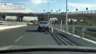 Donna cerca di abbandonare il suo cane in autostrada