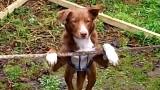 Questo cane sa fare una cosa che molti umani non riuscirebbero mai a fare!!!