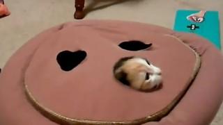 Cuscino per far divertire i gatti