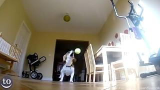 Attenzione a questi cani: Sono i più imbranati del mondo!