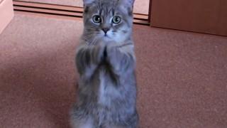 Questo gatto ha un modo per chiedere il cibo a dir poco adorabile. Non lo chiede, lo IMPLORA!