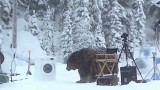 Stavano girando lo spot della lavatrice Samsung quando un orso….
