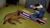 La donna comincia a fare yoga ma non crederete mai cosa farà il suo cane…