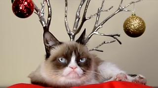 I 5 gatti più famosi del mondo IN UN VIDEO TUTTI INSIEME!!