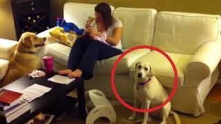 La mamma non interviene? Guardate come ci pensa il cane… BRAVO!