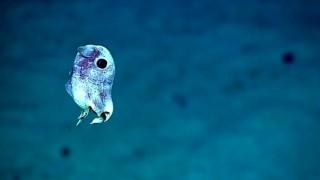 Immagini mozzafiato di NUOVE creature marine
