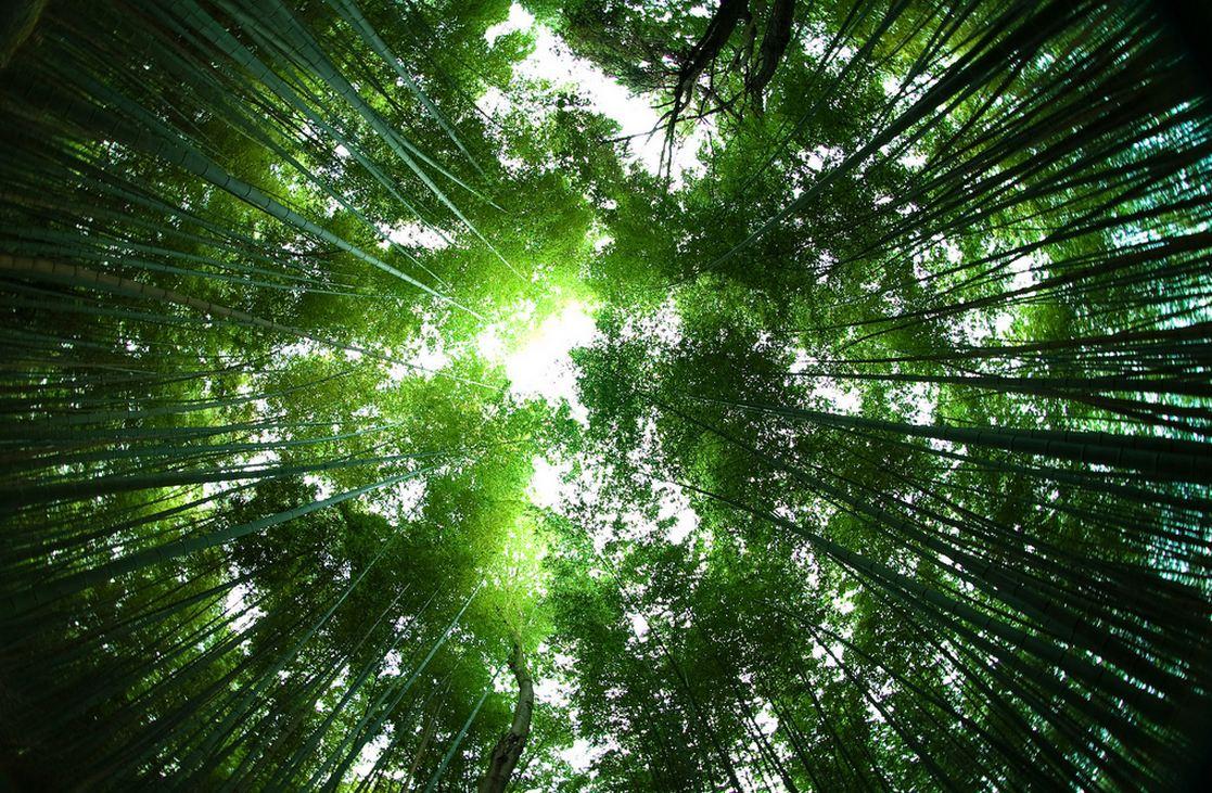 Sagano-Bamboo-Forest-Japan-soundwave
