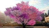 L'unica pianta al mondo che produce 40 tipi di frutti differenti