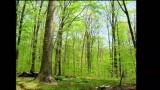 Il trascorrere delle stagioni nella foresta… un anno in 3 minuti