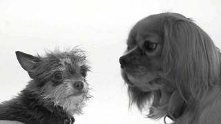 Abbiamo chiesto ad alcuni cani di baciarsi per la prima volta