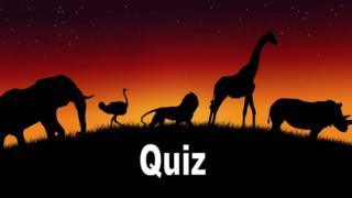 Sai associare gli Animali al loro esatto Paese di origine?
