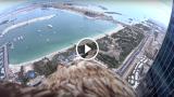 Dubai vista con gli occhi di un'aquila