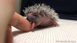 Baby Riccio Dolcissimo (video ad alto contenuto di tenerezza)