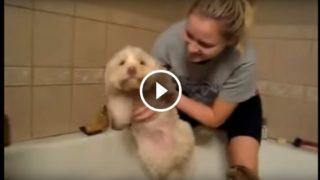 Cani che non amano fare il bagnetto