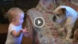 Discorso accorato e appassionato al bulldog sul divano