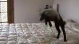 Bambi Jumping