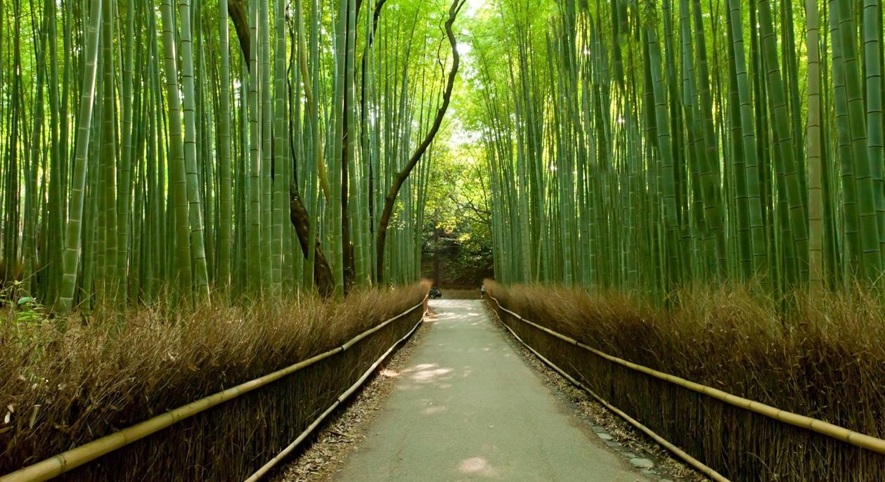 bambu-kyoto-ii-1259x686