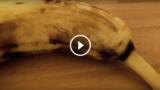 Sta per mangiare una banana quando sotto la buccia inizia a muoversi qualcosa …