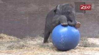 Beco e la sua palla