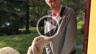 La pecora di Bruno Bozzetto si chiama BEEEELEN e adora le cerniere!