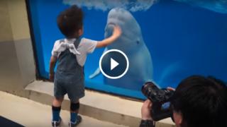 Le Balene Beluga: Piu' intelligenti dell'Uomo e comunicano Telepaticamente