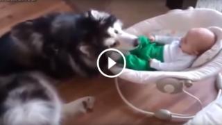 Cani e gatti che si prendono cura dei bambini
