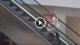 Come sale le scale mobili una bionda…