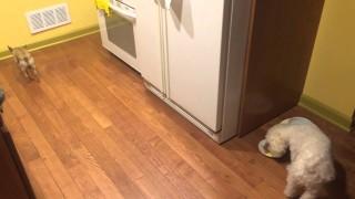 Bonnie odia mangiare da sola e… corre ai ripari