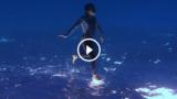 Questo è il video subacqueo più straordinario di sempre. E non ha effetti speciali